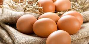 Птицеводы рассказали, когда могут понизиться цены на яйца