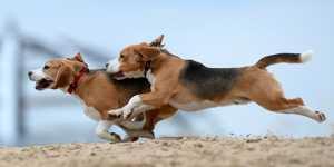 """ФАС: российская """"дочка"""" Farmina Pet Foods координировала цены на корма для животных"""
