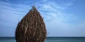 Россия и ее соседи на три года обнулили ввозные пошлины на сушеные кокосы