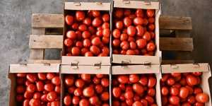 Россия разрешила ввоз томатов и яблок с ряда предприятий Азербайджана