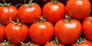 Россельхознадзор запретил поставки томатов из двух областей Казахстана
