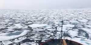 Россия обвинила англосаксонцев вварварском вылове рыбы