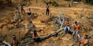 Бедным народам предложили доплачивать за жизнь в лесу