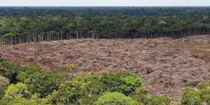 Участки лесов Амазонии продают на Facebook