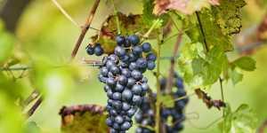 Виноделы ждут подорожания шампанского в России к Новому году на 5-7%